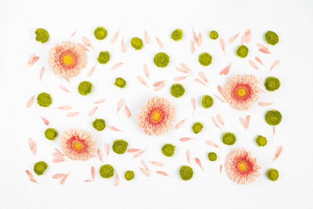 Decorated white background with gerbera flowers