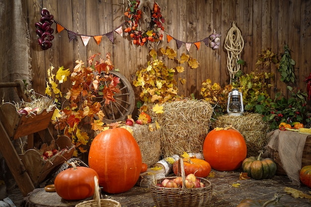 Decoration autumn hay pumpkins and autumn gifts