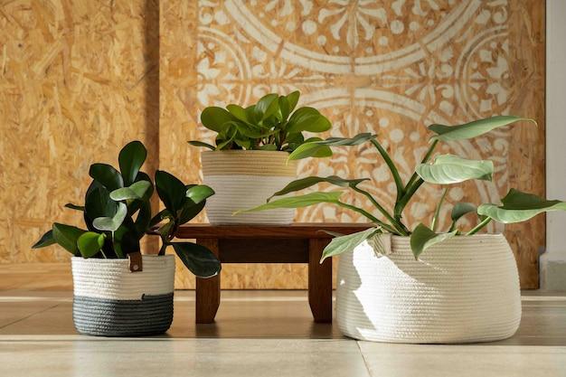 曼荼羅の背景を持つリビングルームの植物の装飾