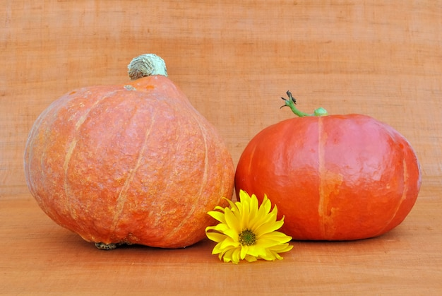 Decoration on orange background with pumpkins and a daisy flower