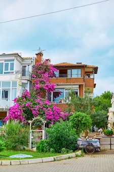 Decoration of a residential building with bright purple flowers.