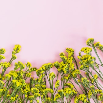 Decoration of yellow flowers on pink background