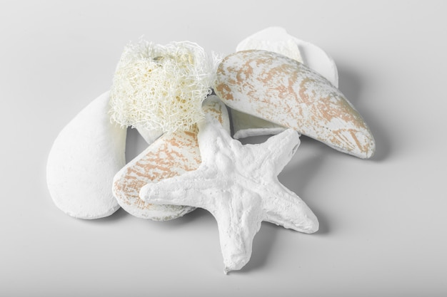 Decorational sea shells isolated over the white