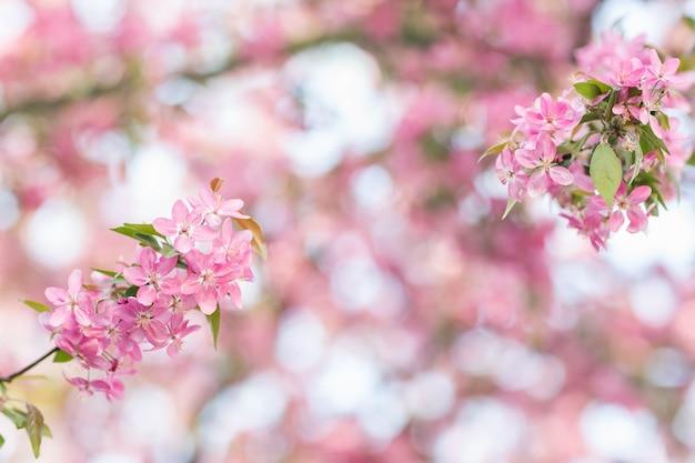 흐리게에 장식 사과 나무 꽃