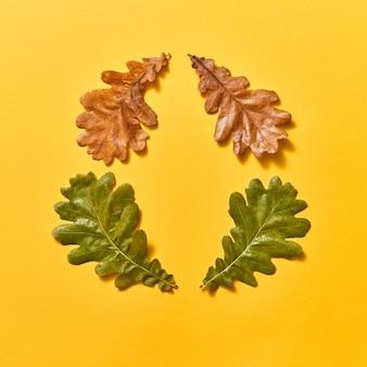 오크에서 장식 가을 프레임은 건조하고 녹색 나뭇잎