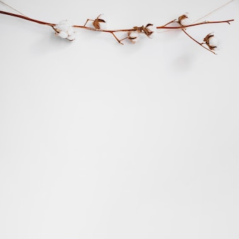 Decorative background with branch