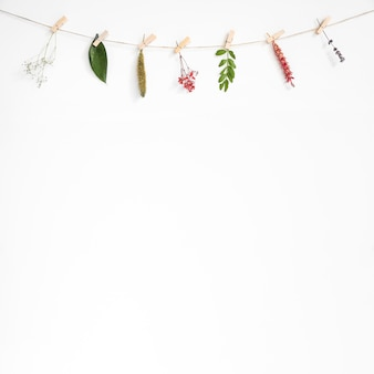 Decorative background with leaves on clothes line