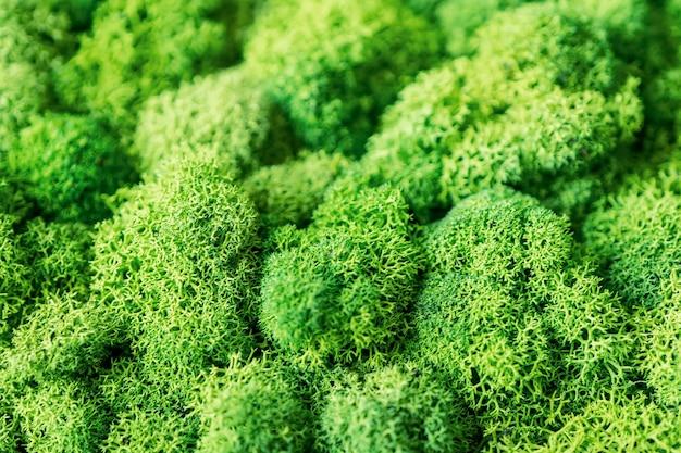 Decorative beautiful background of green moss close-up