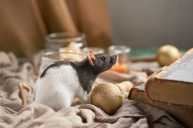 Декоративная черно-белая крыса среди рождественских игрушек и свечей. 2020 год новый символ