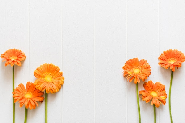 Decorative colorful daisy flowers on a background
