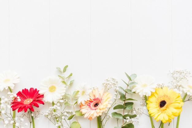 Fiori decorativi decorativi margherita su uno sfondo