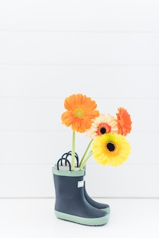 Decorative colorful daisy flowers in boots