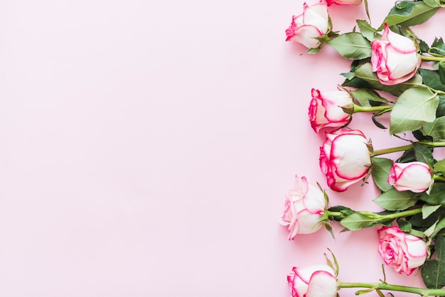 Decorative colorful roses on a background