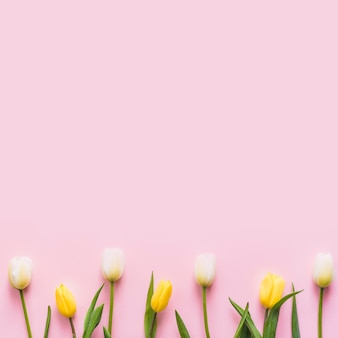 Decorative colorful tulip flowers on a background