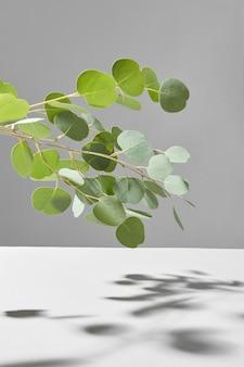 ダブルトーンの灰色の壁、コピースペースの上に柔らかい影を持つ常緑ユーカリ植物の新鮮な自然の枝からの装飾的な構成。