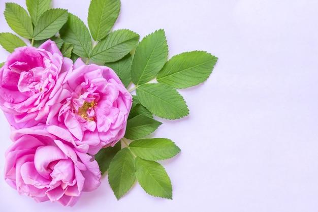 ピンクのワイルドローズと緑の葉からなるレトロなスタイルの装飾的な構成。上面図。フラットレイ