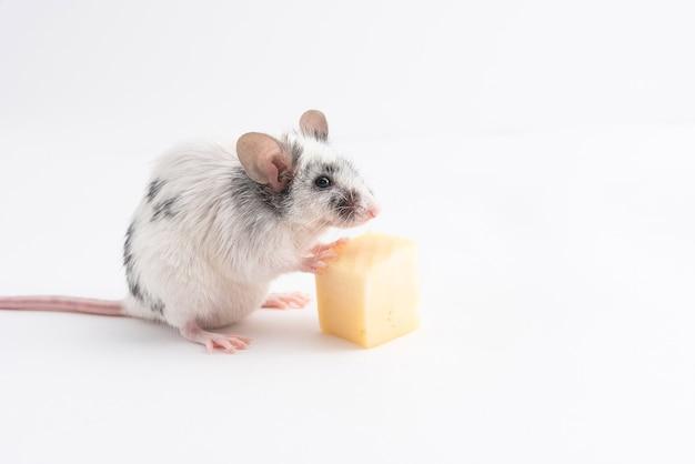 Декоративная милая мышка, держащая сырные ножки на светлом фоне