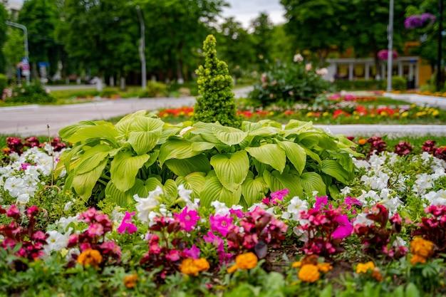잘 가꾸어진 정원에 장식용 꽃. 화려한 화단. 조경 설계.