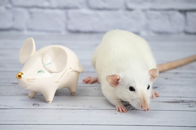 A decorative funny white cute rat stands next to a porcelain figurine in the shape of a rat with a golden nose.