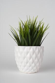 分離された白いセラミックポットを植えた装飾的な草の木