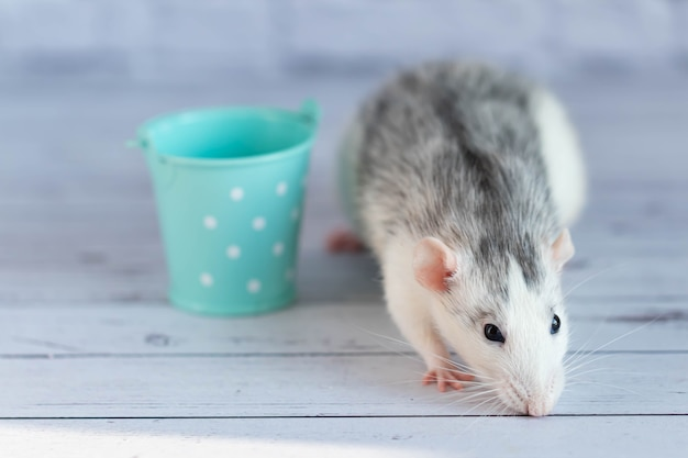 A decorative gray cute rat sits next to a mint-colored bucket.
