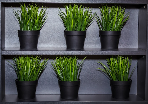 Decorative green grass in flowerpots on the shelves