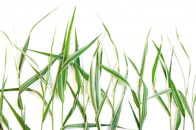 Decorative green grass with white stripes isolated on a white background