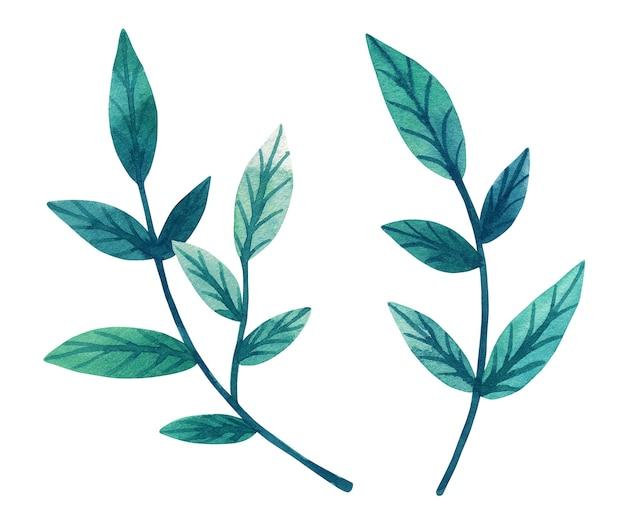 枝に装飾的な緑の葉。手描きの水彩イラスト。白い壁に隔離。