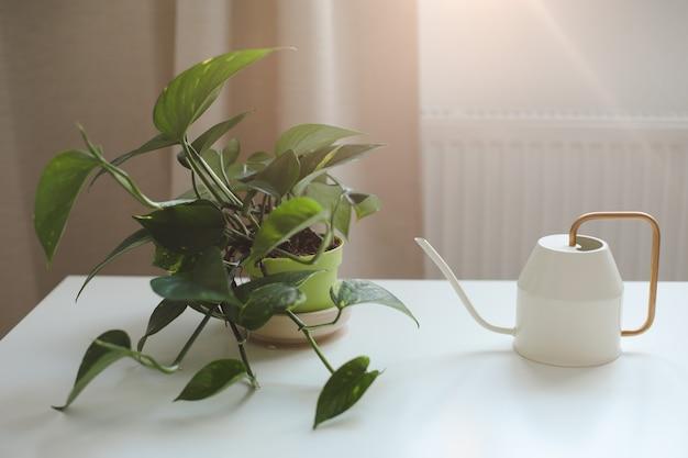 居心地の良い明るいリビングルームのインテリアにじょうろが付いている鍋の装飾的な屋内植物 Premium写真