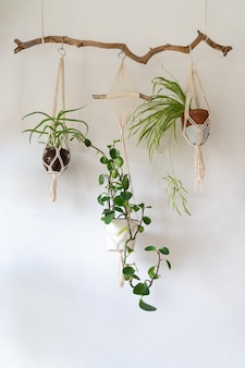 Decorative macrame plant hanger with cotton yarn decorating the interior of house with white walls