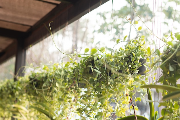Decorative macrame plant hangers in restaurant