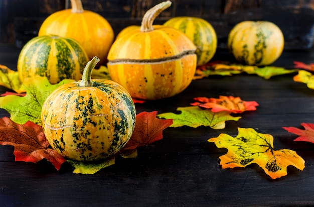 Decorative mini  pumpkins with fall dried leaves on dark background