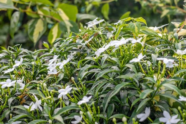 선택적 포커스가 있는 장식용 장식용 흰색 꽃 나무