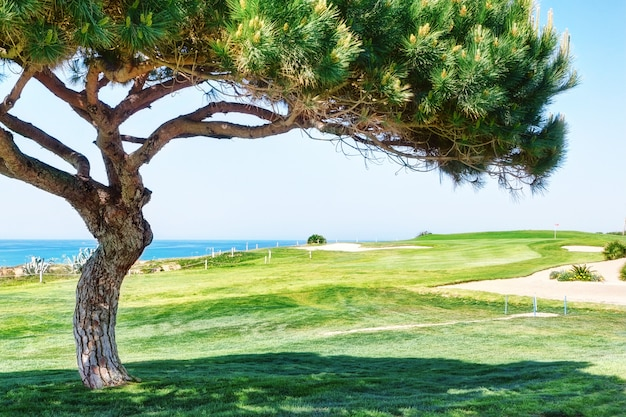 Decorative pine tree on a golf course near the sea.