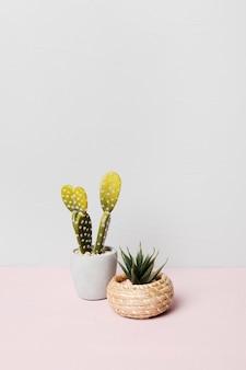 Decorative plant inside minimal vase