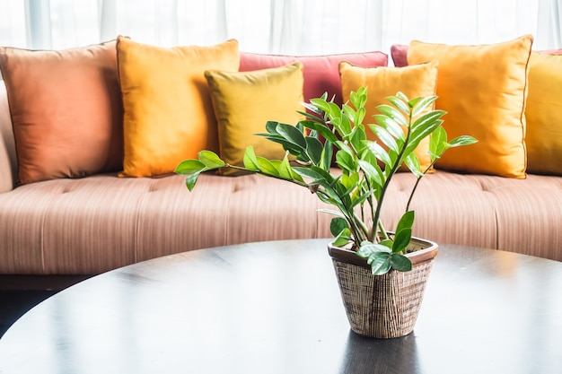 Decorative plant in the living room