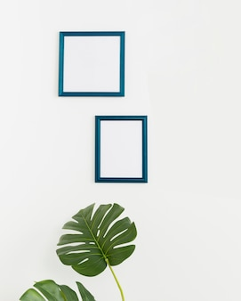 Decorative plant with empty frames