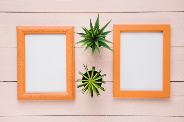 Decorative plants between minimalist frames