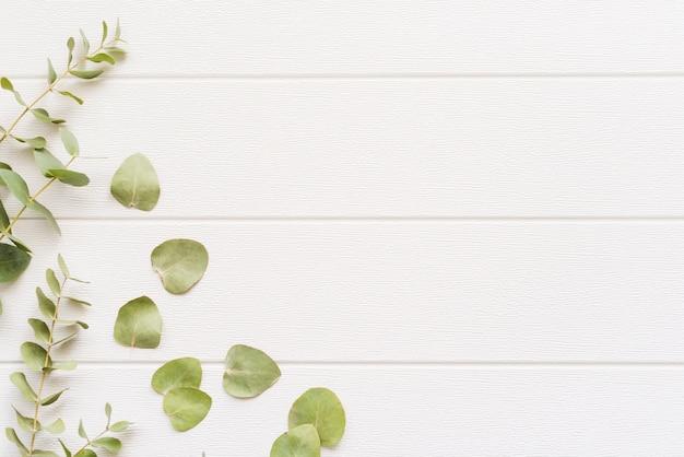 背景に装飾的な植物