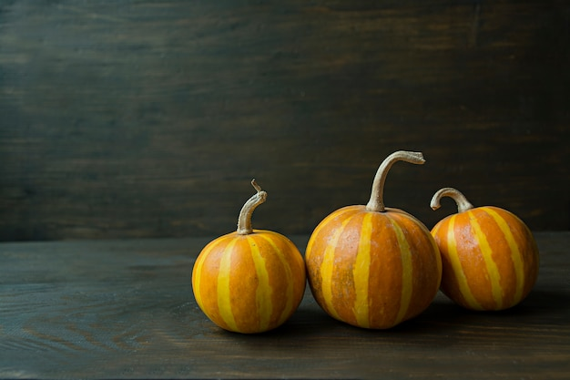 Decorative pumpkin. halloween still life.