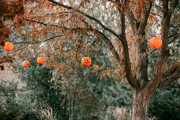 Decorative pumpkins hanging from trees
