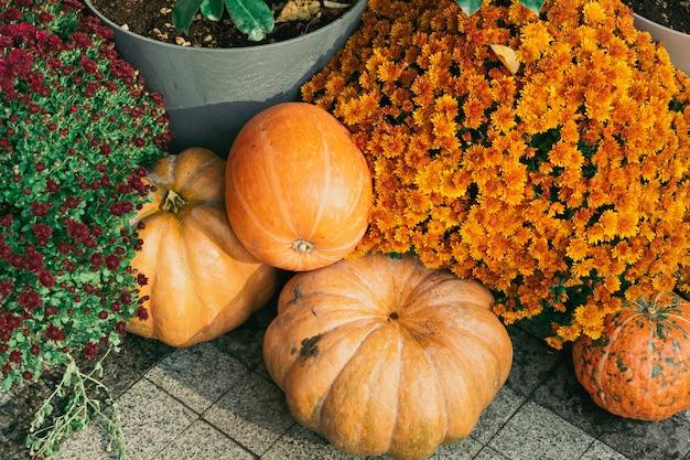 Декоративные тыквы уличные цветы и открытый декор на хэллоуин урожай и украшение сада