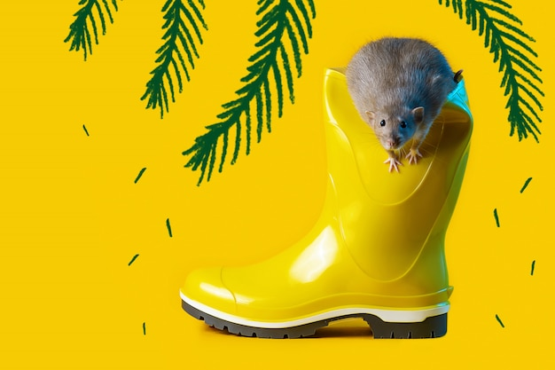 Decorative rat in bright yellow rubber boot on the blue background. symbolizes the coming year of the rat
