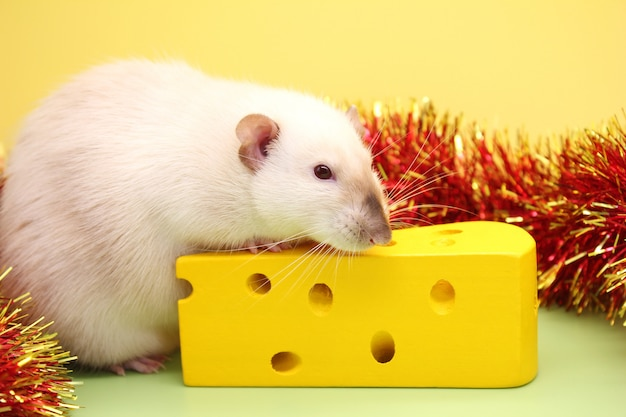 Decorative rat and toy cheese. the rat is a symbol of the new year.
