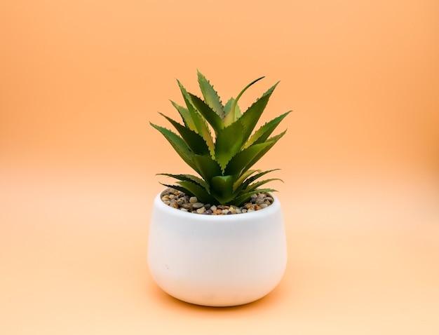 均一な背景の白い鍋に装飾的な緋色の花。