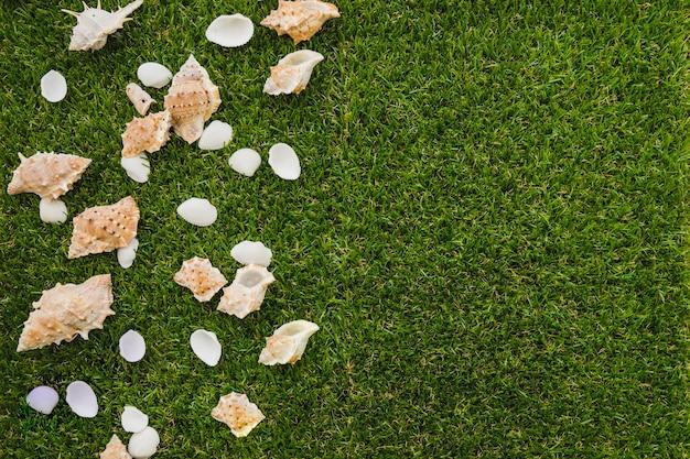 Decorative seashells on green grass surface