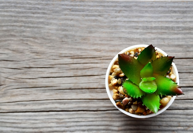 Decorative succulent plant in a white pot on old wooden background with space for text.top view.