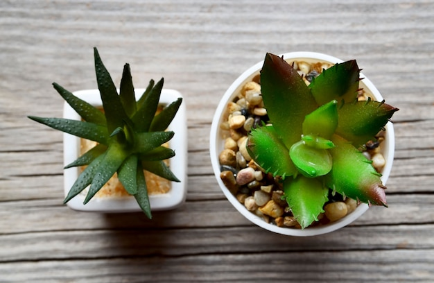 Decorative succulent plants in a white pot on old wooden background with space for text.top view.