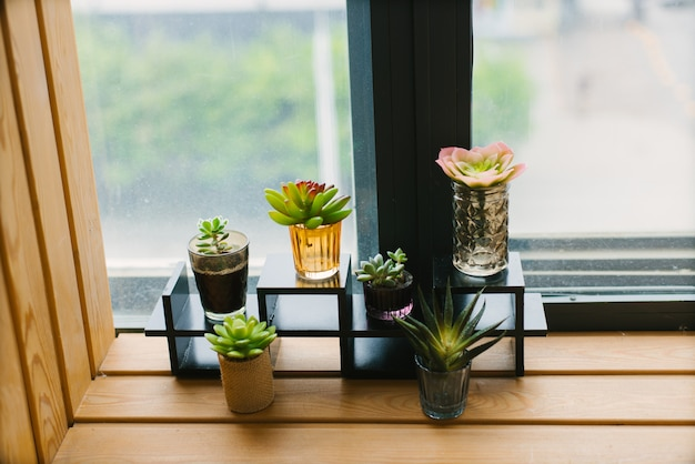 Decorative succulents in a beautiful variety of pots on the windowsill in the home or office