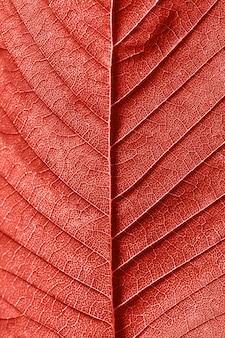 カラーリビングコーラルであなたのアイデアの創造的な背景として装飾的なテクスチャードヴィエンスの葉のマクロパターン。上面図